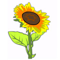 რომელ ყვავილთან გაქვს საერთო?